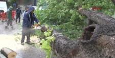 Asırlık ağaç minibüsün üzerine devrildi